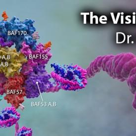 DrCigall-Kadoch_Visionary_ch_01_blog_header